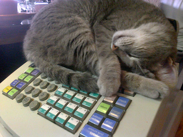 cash-register-kitty